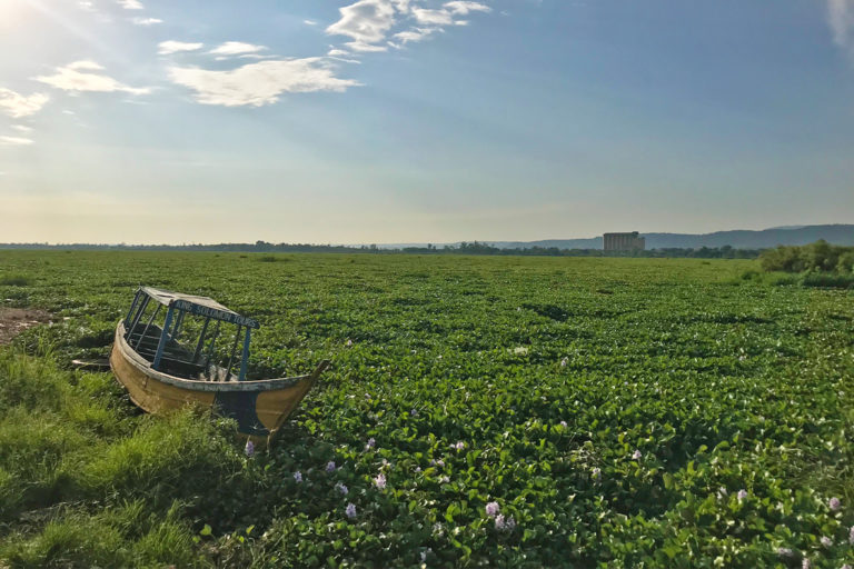 A Lake Victoria fishing boat trapped in a sea of water hyacinth. Image by Mwe17 via Wikimedia Commons (CC BY-SA 4.0).