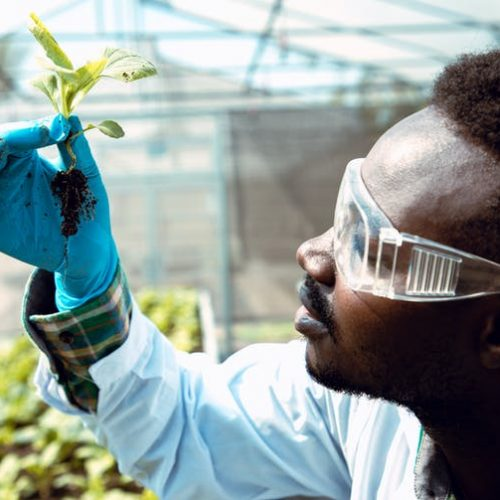 Innovation in food systems and agricultural research is critical for African countries. krumanop/Shutterstock