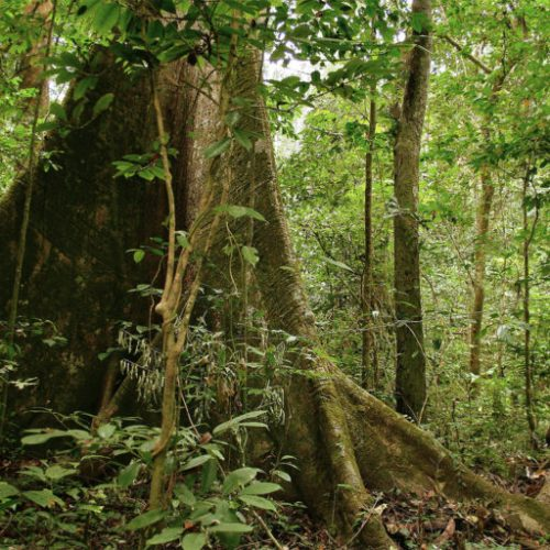 88% of Gabon is covered in tropical rainforest and the country has an average deforestation rate of less than 0.1%, making it a high-forest, low-deforestation (HFLD) country. Image by jbdodane via Flickr (CC BY-NC 2.0).