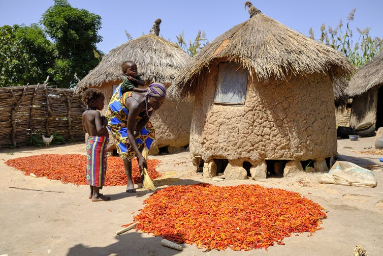 A woman drying red chillies outside her hut in Niger State, north central Nigeria. Photo by Jorge Fernández/LightRocket via Getty Images